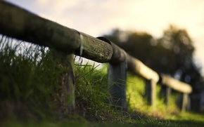 Picture grass, macro, the fence