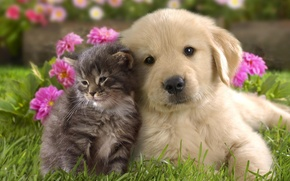 Picture grass, flowers, kitty, background, puppy, kids, a couple