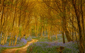 Picture road, forest, trees, flowers