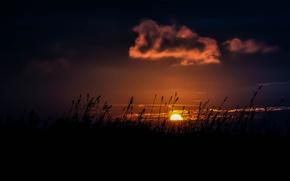 Picture grass, fireball, twilight, sunset, clouds, sun, dusk, vegetation, stalks