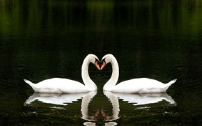 Picture love, lake, together, heart, love, beautiful, heart, beautiful, lake, together, Two, white swans, Two, romantically, …