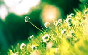 Picture Flowers, Grass, Light, Grass, Flowers, Shine