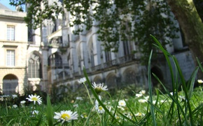 Picture field, grass, Church, Cathedral, France, cathedral, france, macro, medieval, church, Abbey, rouen, abbey, Rouen