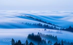 Wallpaper forest, the sky, fog, morning