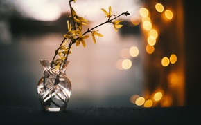 Picture background, color, branch
