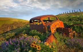 Picture Flowers, Machine, Dead