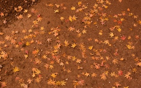 Wallpaper leaves, earth, yellow, maple