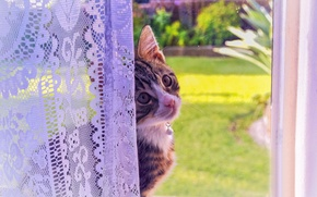 Picture cat, look, kitty, window