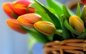 Picture flowers, basket, bouquet, tulips, flowers, tulips, bouquet, basket