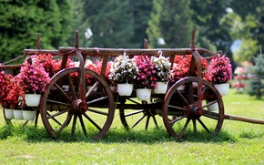Picture summer, flowers, cart, pots, pirada