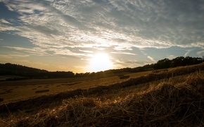 Picture field, landscape, sunset, hay