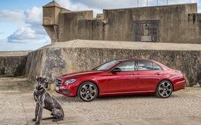 Picture Mercedes-Benz, dog, E-Class, Mercedes, W213
