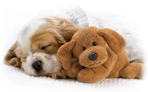 Wallpaper toy, puppy, baby