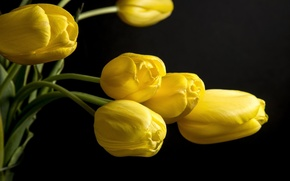 Picture flower, yellow, nice