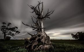 Picture field, night, tree