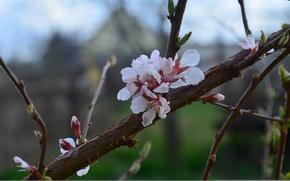 Picture branch, petals, Cherry, twilight, flowers, bokeh