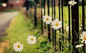 Wallpaper flowers, leaves, flowers, widescreen, blur, leaves, HD wallpapers, Wallpaper, leaves, full screen, flower, the fence, ...