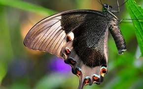 Picture nature, sheet, butterfly, wings, insect, moth