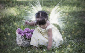 Picture flowers, mood, girl, basket, wings, hydrangeas, little fairy