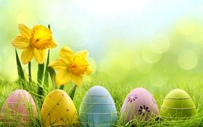 Picture grass, flowers, eggs, spring, meadow, Easter, grass, sunshine, flowers, daffodils, spring, eggs, easter, meadow, daffodils