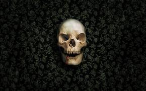 Wallpaper blood, teeth, skull