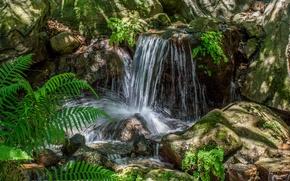 Picture stream, stones, fern