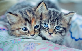 Picture kittens, cat, kitty