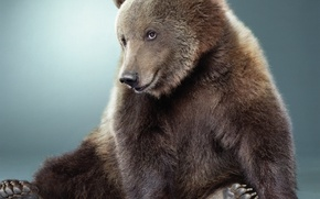 Picture WOOL, FACE, BEAR, PAWS, CLAWS, I love it, SPOUT