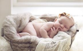Picture basket, sleep, girl, baby