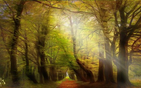 Picture Poland, Lower Silesia, mystical forest, Msciwojow