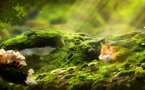 Picture Fox, mushrooms, art, log, the sun's rays, moss, web, grass, Fox, forest