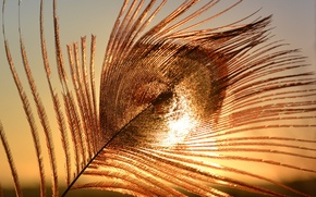 Picture the sky, macro, sunset, peacock feather