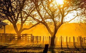 Picture light, trees, sunset, sunlight, ranch