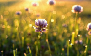 Picture greens, field, flower, summer, grass, leaves, the sun, flowers, background, green, Wallpaper, beauty, blur, morning, ...