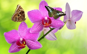 Picture greens, butterfly, glare, background, stem, orchids, flowers