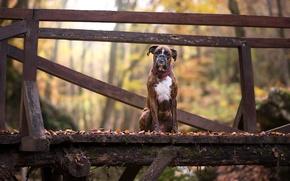 Wallpaper bridge, each, dog