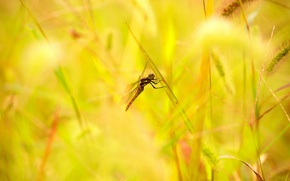 Picture summer, grass, leaves, dragonfly, spikelets