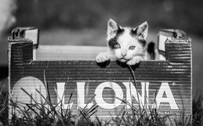 Picture grass, look, box, Kitty, black and white