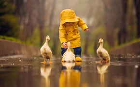 Picture water, birds, reflection, puddle, baby, child, Chicks, the goslings