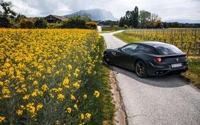 Picture Flowers, Road, Black, Ferrari, Ass, Ferrari, Flowers, Black, Supercar, Road, Italian, Supercar, Italian, Rear