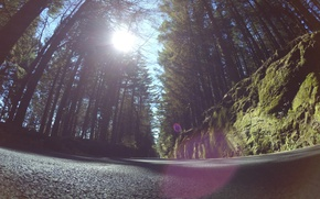 Picture sunshine, forest, road