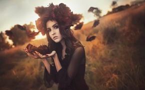 Picture flowers, the wind, portrait, petals, Rose