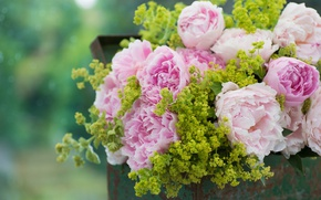 Picture bouquet, box, peonies