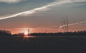 Picture field, grass, the sun, light, sunset, orange, orange sun