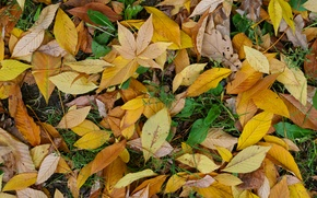 Picture green, yellow, autumn, leaf