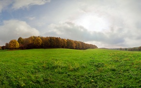 Picture autumn, grass, glade, Ukraine, Dergachev, Dergachov