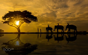 Picture water, the sun, people, elephants
