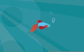 Picture fish, minimal, Windows 8, default
