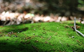Picture greens, macro, branches, nature
