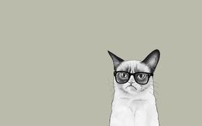 Picture cat, cat, minimalism, glasses, Tartar Sauce, Grumpy Cat, Tardar Sauce, Grumpy Cat